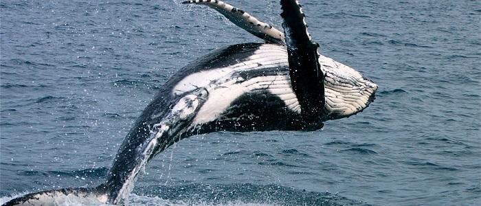 Balinalarda Görme ve İşitme Nasıldır?