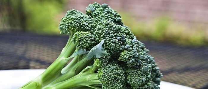 Brokolinin Özellikleri