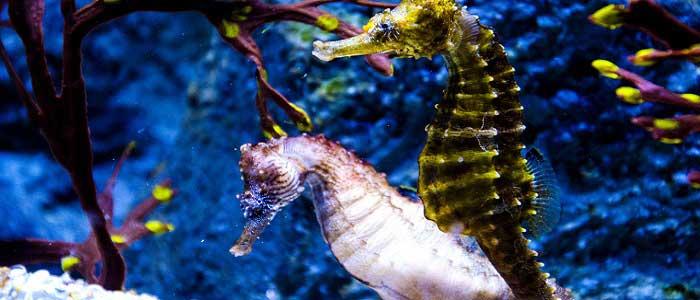 Denizatlarının Bilimsel Sınıflandırması