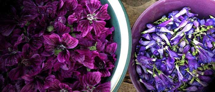 Hatmi Çiçeği Nasıl Kullanılır?