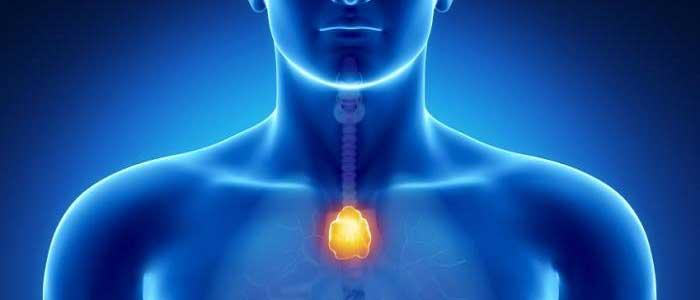 Bağışıklık Sistemi Organları Nelerdir?