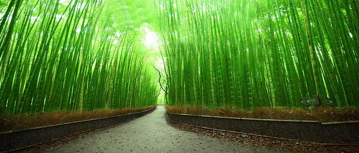Bambu Ağacının Özellikleri Nelerdir?