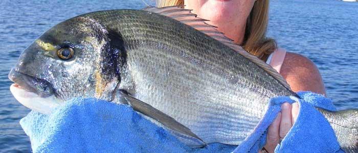 Çupra Balığının Çeşitleri Nelerdir?