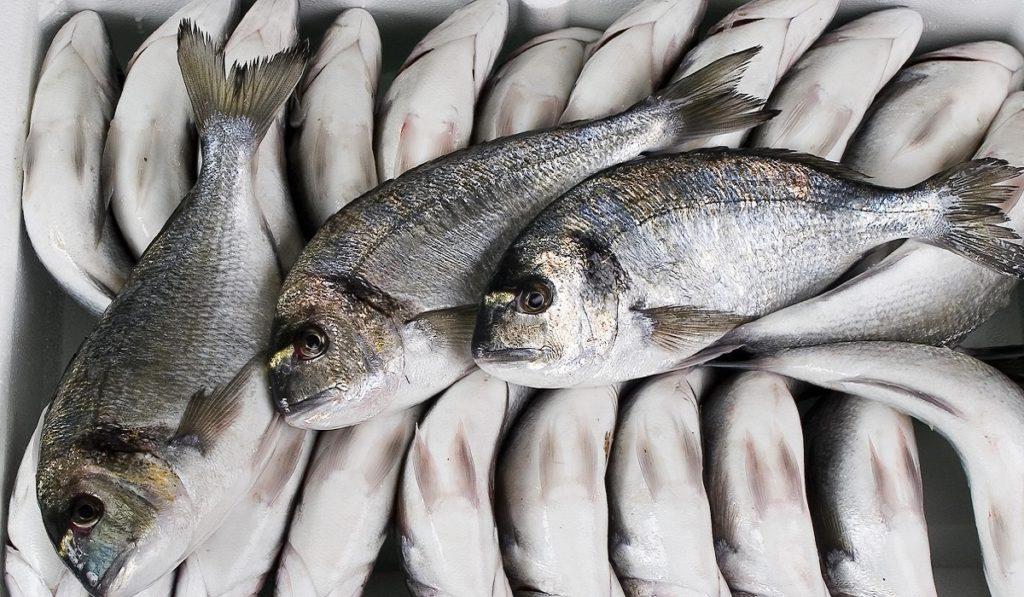 Çupra (Çipura) Balıkları Hakkında Bilgi; Çupra Balığı Nedir? Özellikleri Nelerdir?