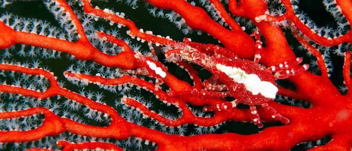 Mercan Taşının Özellikleri Nelerdir?