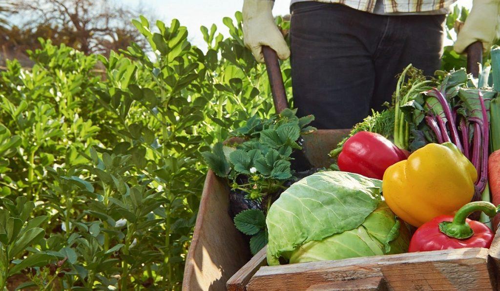 Organik Tarım Nedir? Nasıl Yapılır? Önemi ve Faydaları Nelerdir?