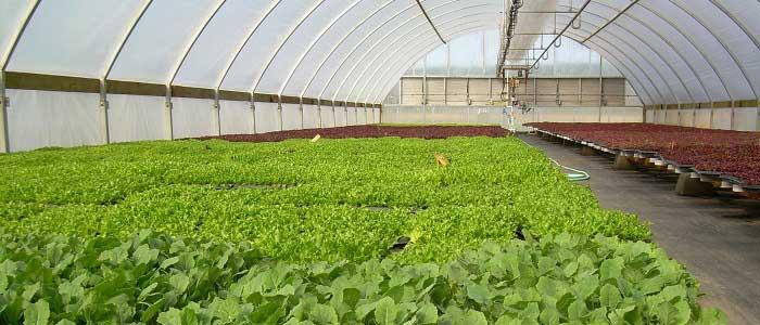 Organik Tarım Nasıl Yapılır?