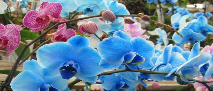 Orkidenin Özellikleri Nelerdir?