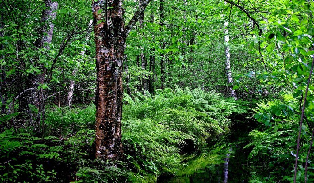 Orman Nedir? Türleri, Önemi ve Faydaları Nelerdir?