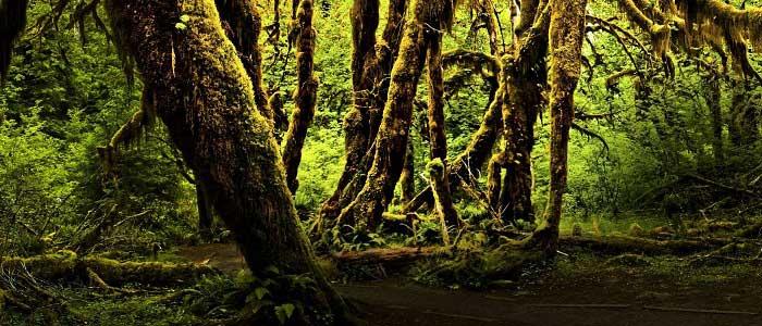 Orman Türleri Nelerdir?