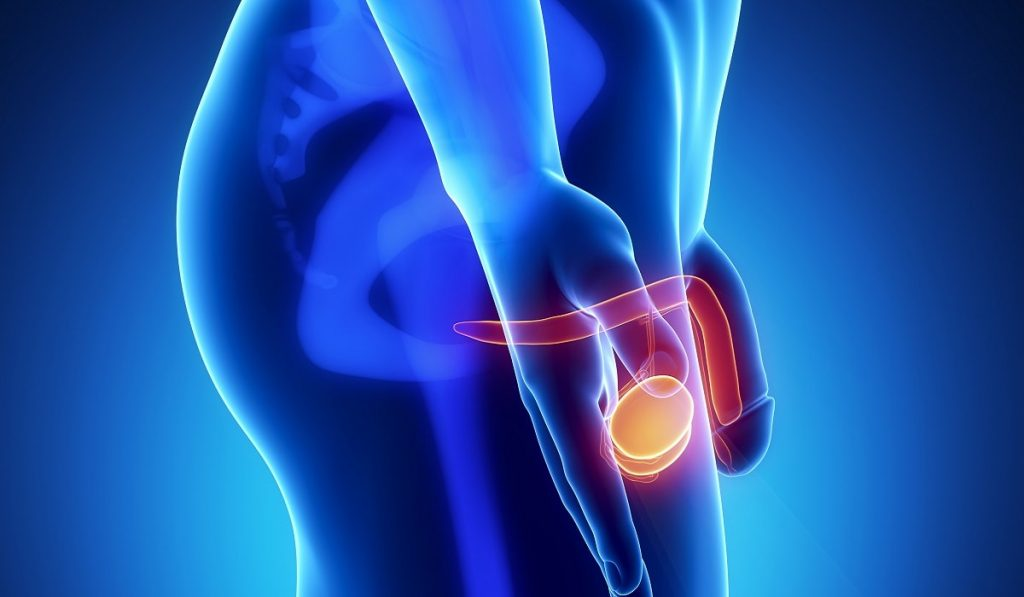 Prostat Kanseri Nedir? Nedenleri, Belirtileri, Korunma Yolları ve Tedavisi