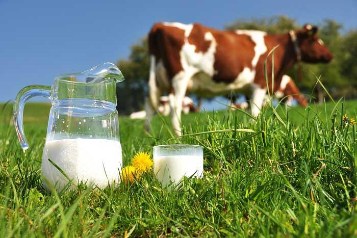 Süt Nedir? Faydaları ve Zararları Nelerdir?
