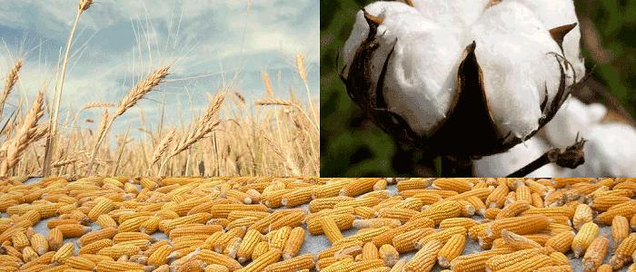 Tarımsal Ürünler ile İşlem Yaparak Para Kazanmak