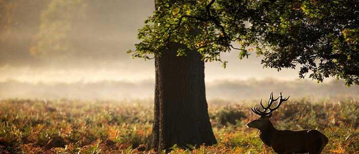 Palamut Ağacının Özellikleri Nelerdir?