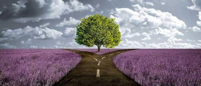 Çınar Ağacı Nedir?