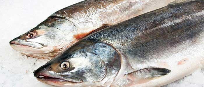 Somon Balığı Nedir?