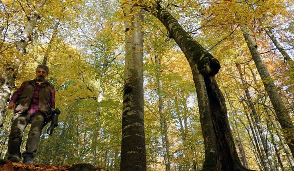 Pisagor Ağacı Nedir? Özellikleri ve Faydaları Nelerdir?