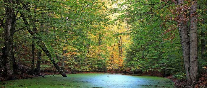 Pisagor Ağacının Özellikleri Nelerdir?