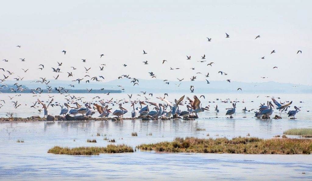 Kuşcenneti Milli Parkı (Manyas Kuş Cenneti) Hakkında Bilgiler; Nerededir, Özellikleri ve Tarihçesi