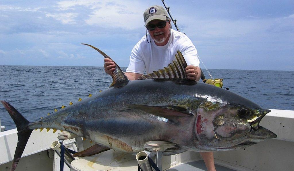 Ton Balıkları Hakkında Bilgi; Orkinos Balığı Nedir? Özellikleri Nelerdir?