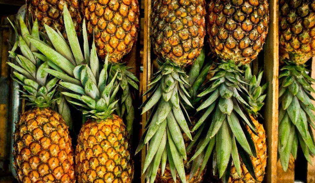 Ananas Nedir? Çeşitleri, Özellikleri ve Faydaları Nelerdir?