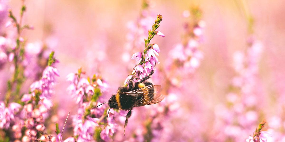 Arı Poleninin Özellikleri Nelerdir?