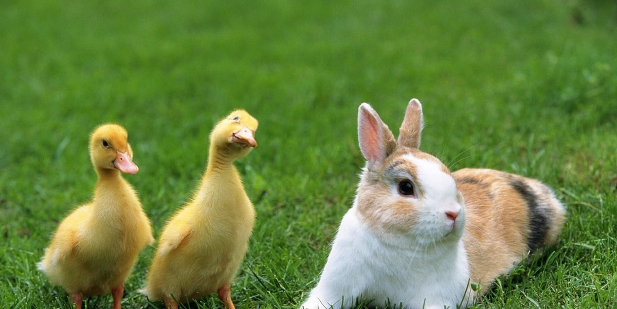 Tavşanların Bilimsel Sınıflandırması