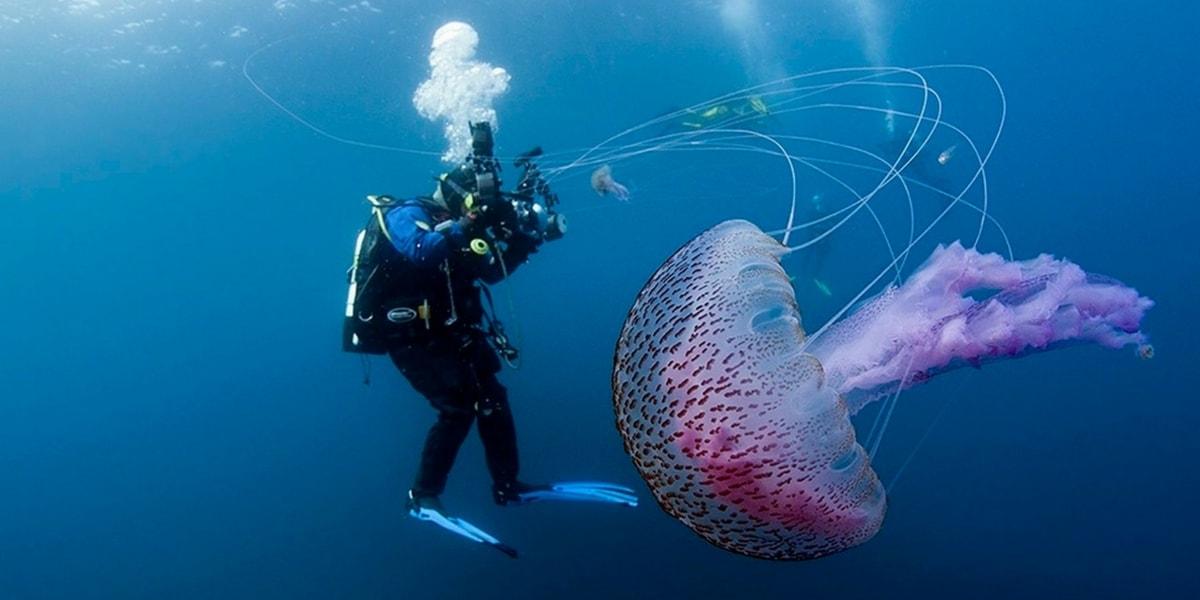 Denizanalarının Özellikleri Nelerdir?