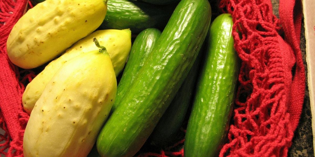 Salatalık Çeşitleri Nelerdir?