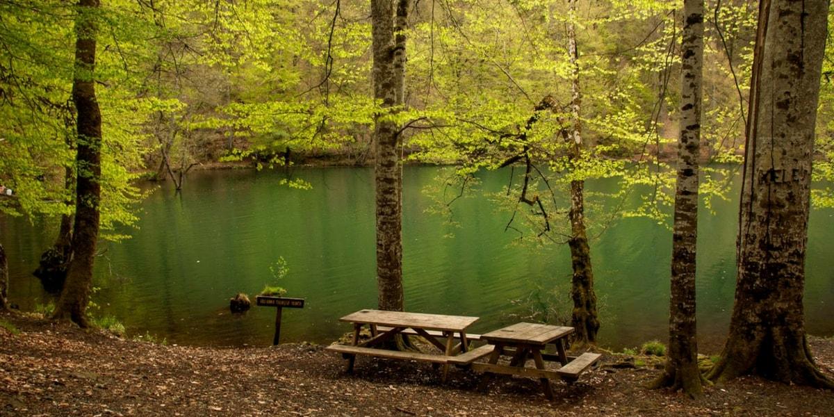 Göllerin Özellikleri Nelerdir?