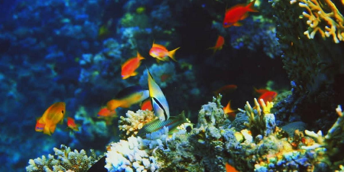 Japon Balıklarında Görülen Hastalıklar
