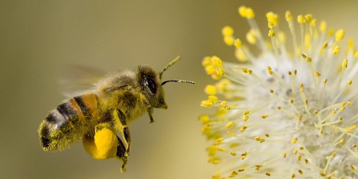 Arı Nedir?