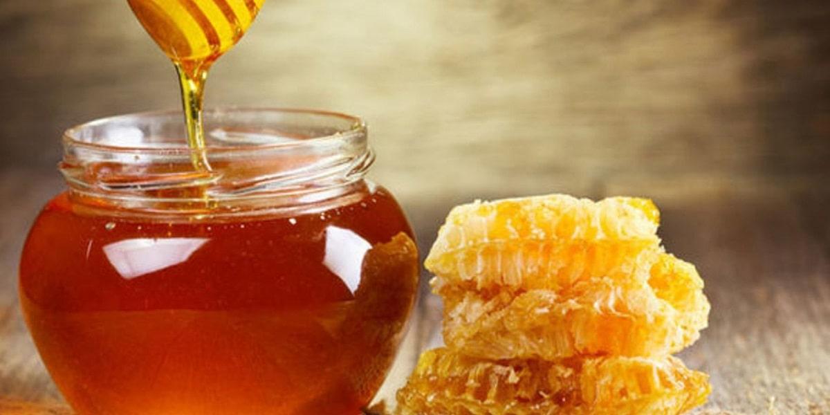 Arıların Faydaları ve Yaşamımız için Önemi