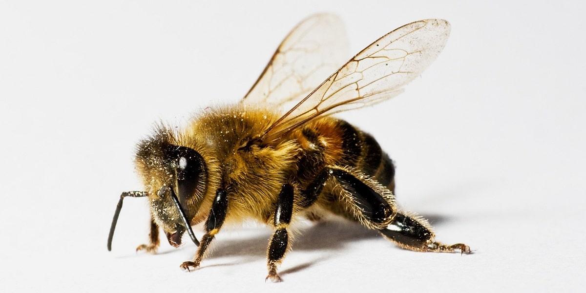 Arıların Özellikleri Nelerdir?