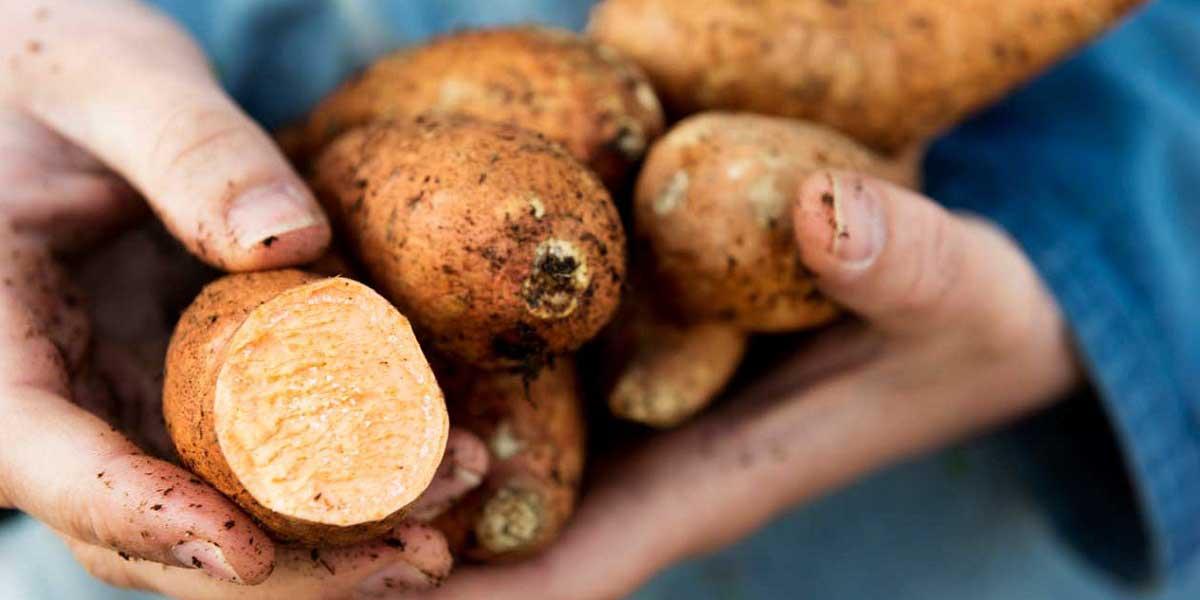 Patatesin Özellikleri Nelerdir?
